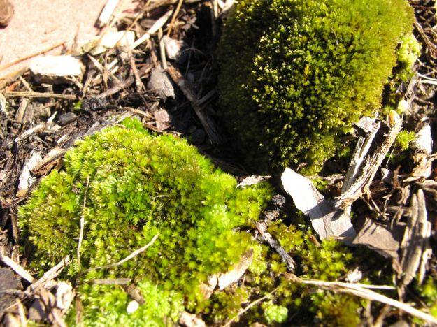 Moss In Meditation Circle