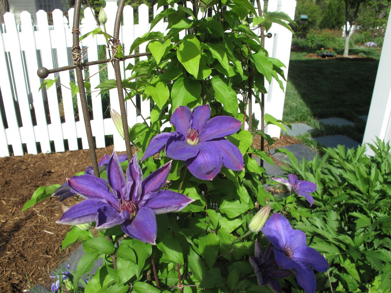 clematis jackmanii on mailbox images. Black Bedroom Furniture Sets. Home Design Ideas
