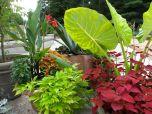 July Foliage In Rose Gardens-Duke Gardens