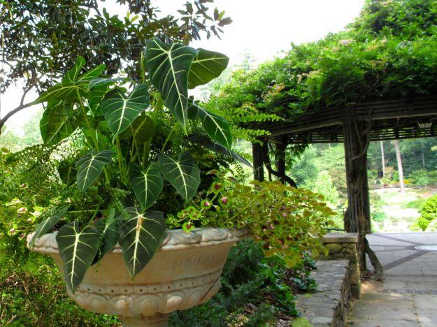 Planter Near Wisteria Pergola-Duke Gardens