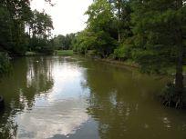 Garden Pond at Asiatic Arboretum