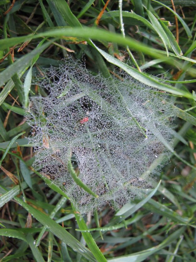 Spider Web Among the Grass
