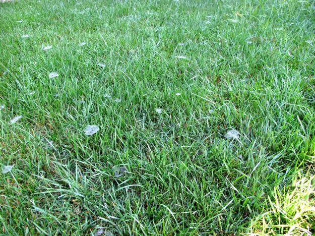 Grassy Webs