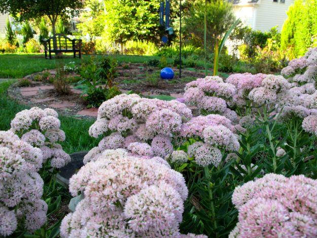 View of Mediation Circle with Sedum 'Autumn Joy' (Herbstfreude) (Stonecrop)