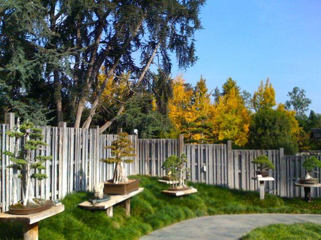 Bonsai in Japanese Garden, Huntington Botanical Gardens