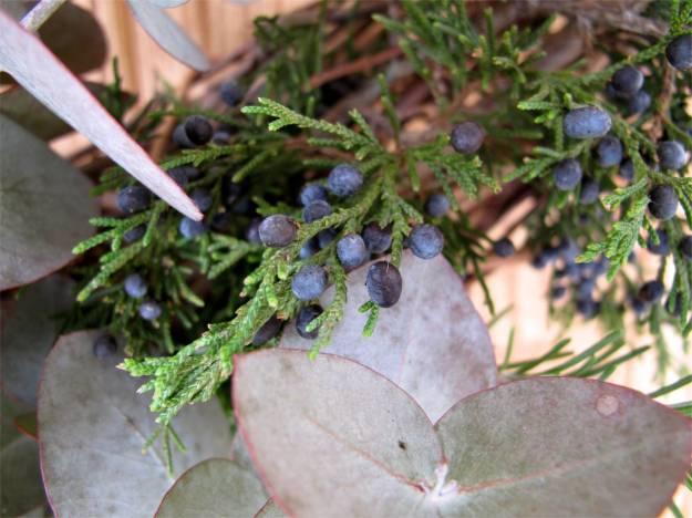 Eucalyptus leaves and Juniperus virginiana (Eastern redcedar)