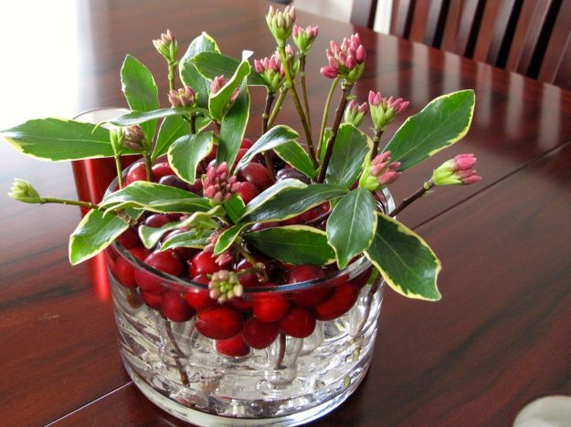 Winter daphne and cranberries