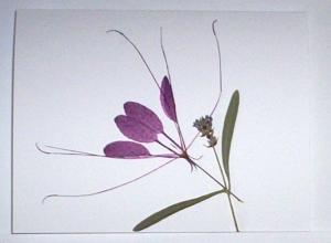 botanical-2
