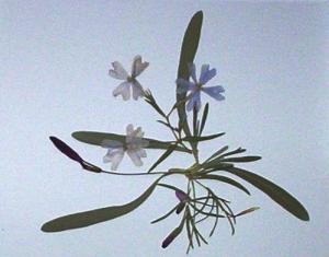 botanical-3