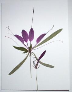 botanical-4