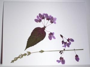 botanical-5