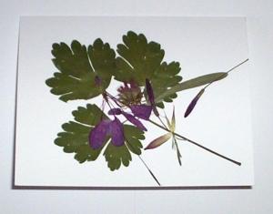 botanical-6