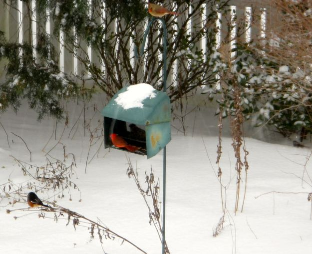 Eastern Towhee, male Northern Cardinal, female Northern Cardinal (above the feeder)