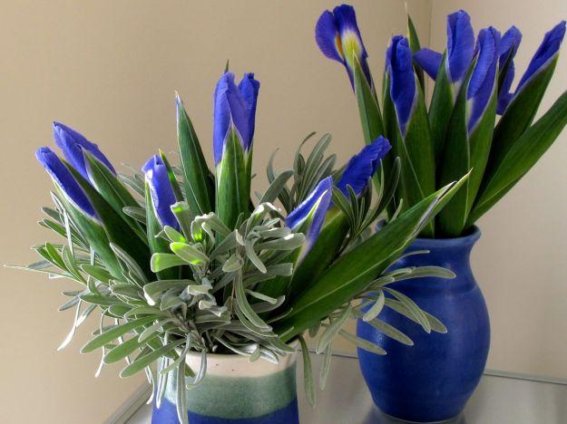 Spring Flowers-3