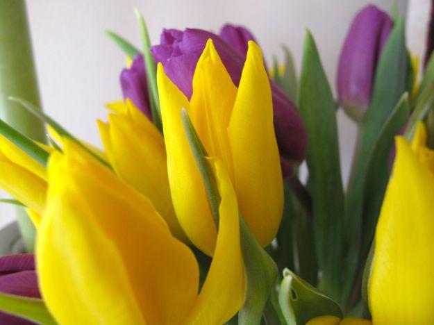Spring Flowers-6