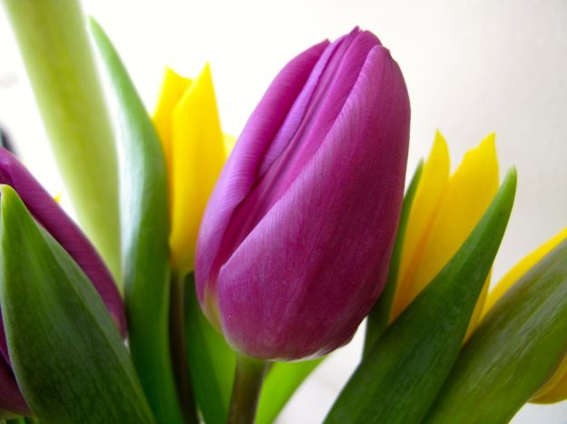 Spring Flowers-7