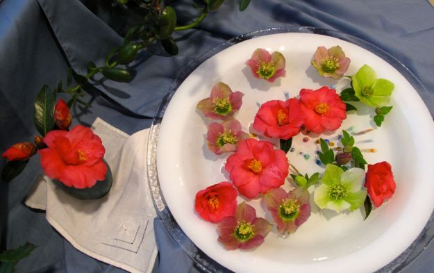 Camellia x 'Coral Delight and Helleborus x hybridus (Lenten rose)