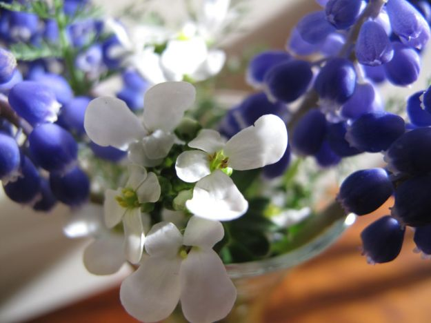 Muscari and Iberis