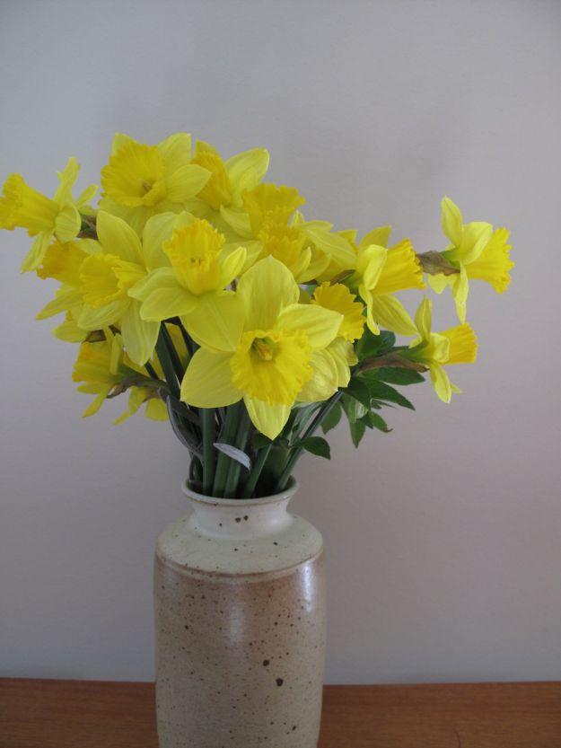 Narcissus 'King Alfred' (trumpet daffodil)