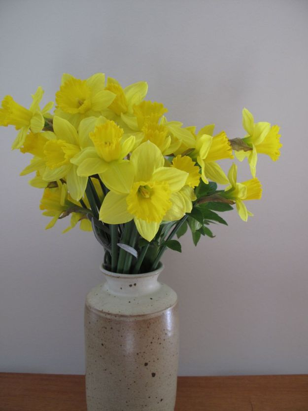 Narcissus 'King Alfred' (trumpet daffodil)