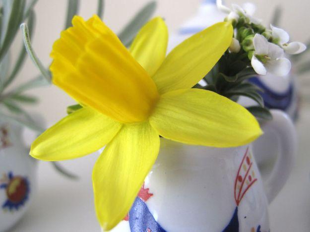 Narcissus 'Tete-a-Tete'