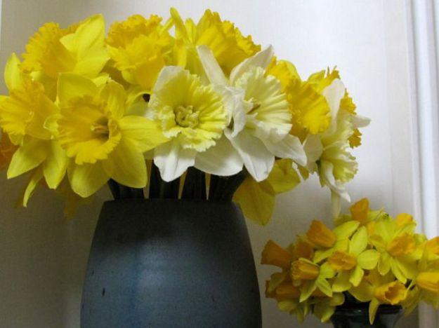 Narcissus2