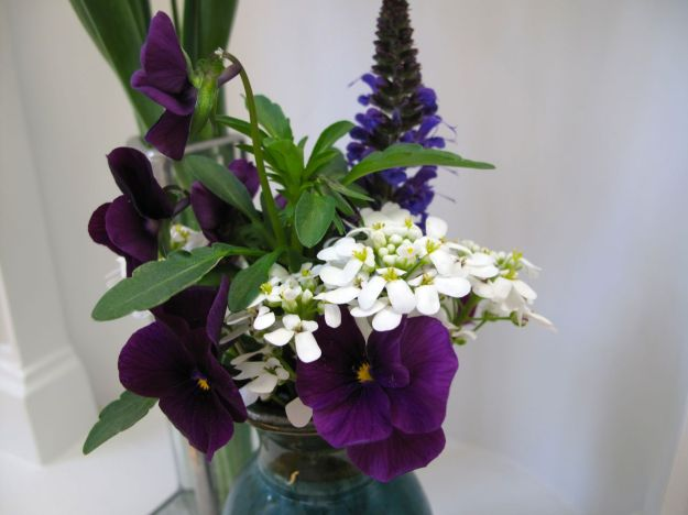Candytuft, Viola and Meadow Sage