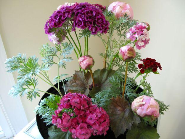 Dianthus barbatus (Sweet William) and Paeonia 'Pink Parfait'