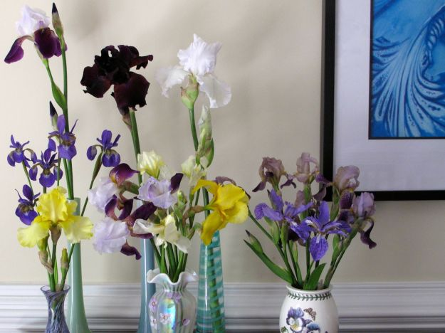 In A Vase On Monday-Iris