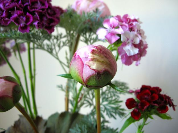 Paeonia 'Pink Parfait'  and Sweet William