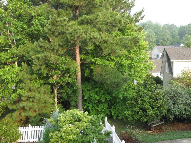 Garden Views At Summer Solstice-7