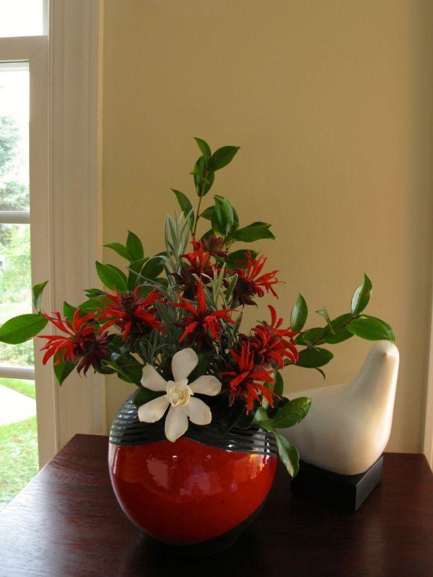 Monarda didyma (Scarlet Beebalm)