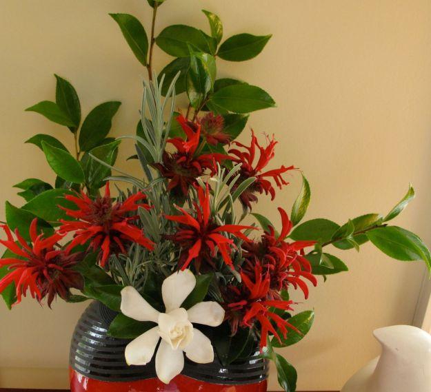 Monarda didyma (Scarlet Beebalm) and Gardenia