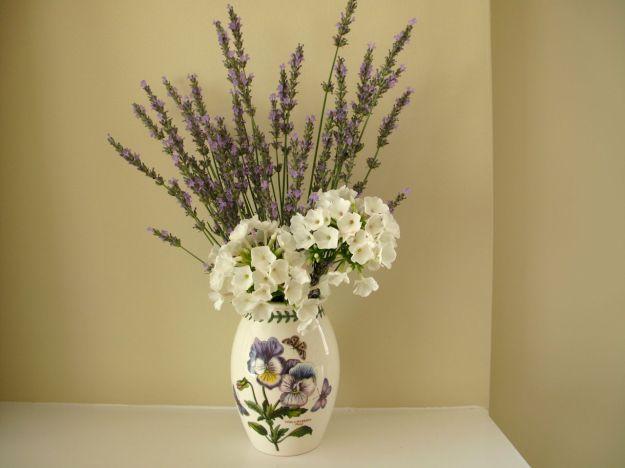 Phlox paniculata 'White Flame' (Dwarf Garden Phlox) and Lavender-2