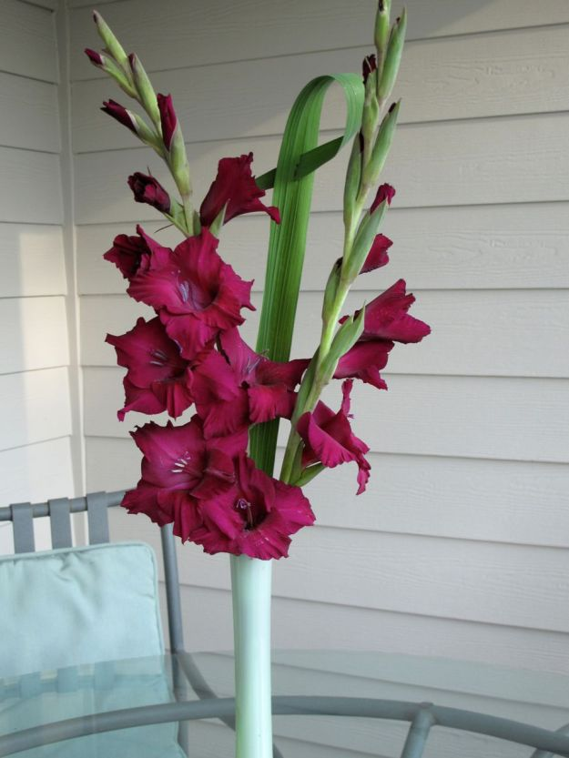 Gladioli In A Vase On Monday