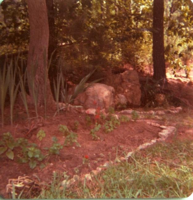 A First Garden
