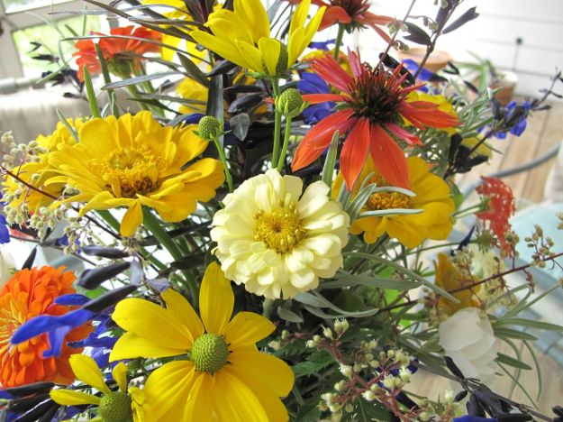 Zinnia, Rudbeckia and Echinacea 'Big Sky Sundown' (Hybrid Coneflower)