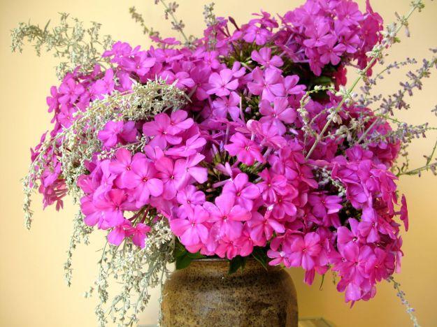 In A Vase On Monday-Garden Phlox