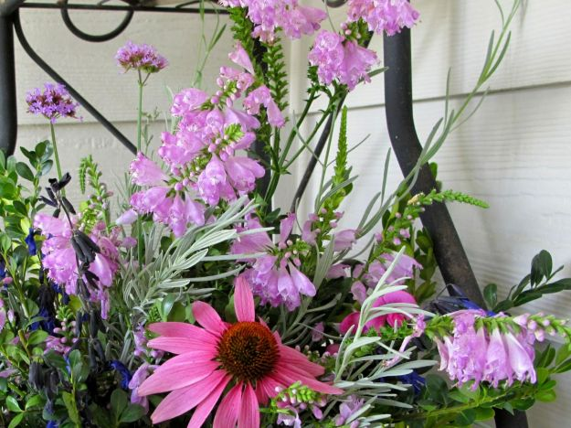 Pinkish hues dominate the garden's blooms: Everlasting Sweet Pea, Obedient Plant, Echinacea