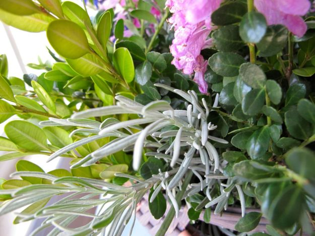 Dark and light green and silvery foliage was used for this late summer arrangement.