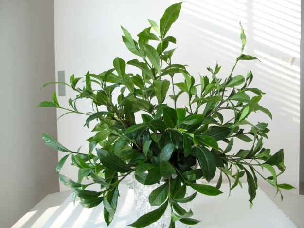Foliage of Gardenia jasminoides was used to establish the round shape of the design.