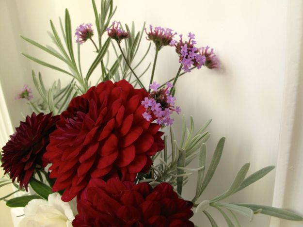 Verbena bonariensis and lavender with Dahlias