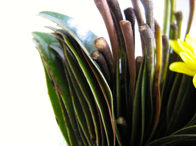 Magnolia leaves, stacked and cut in half provide the foliage.