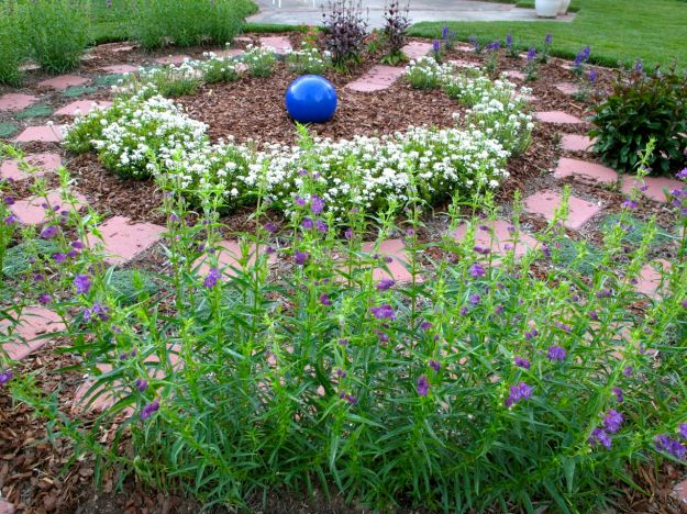 Meditation Circle May 3, 2012 Foreground: Penstemon  mexicali 'Pike's Peak Purple' (Beardtongue)  Center: Iberis Sempervirens (Candytuft) Upper Right and center: Penstemon digitalis 'Husker Red' (Beardtongue) Upper Right: Angelonia