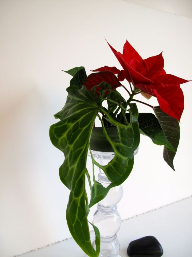 In A Vase On Monday - Arum and Poinsettia