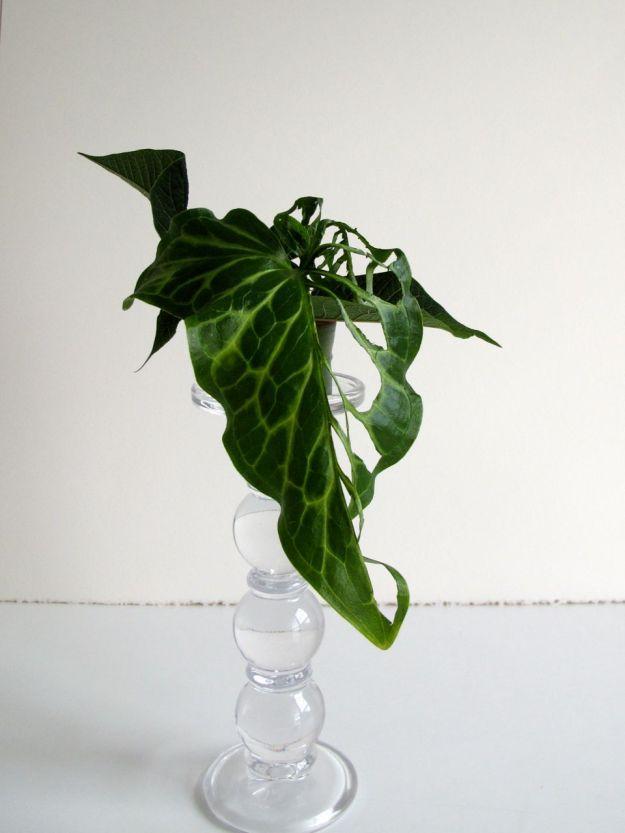 Manipulated Arum Leaf