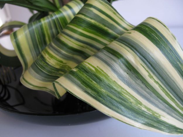 Wired and folded aspidistra leaf