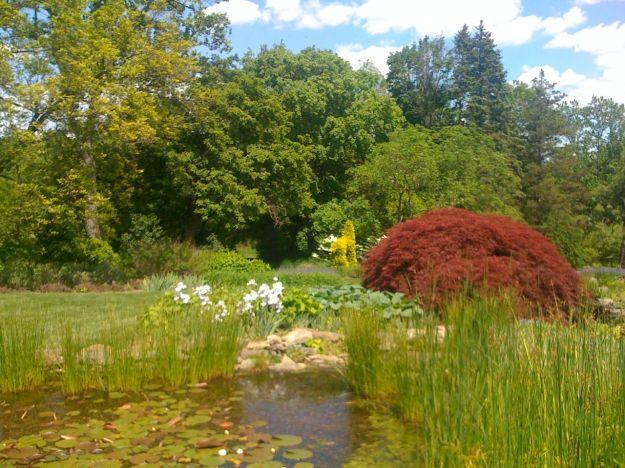 The Iris Garden