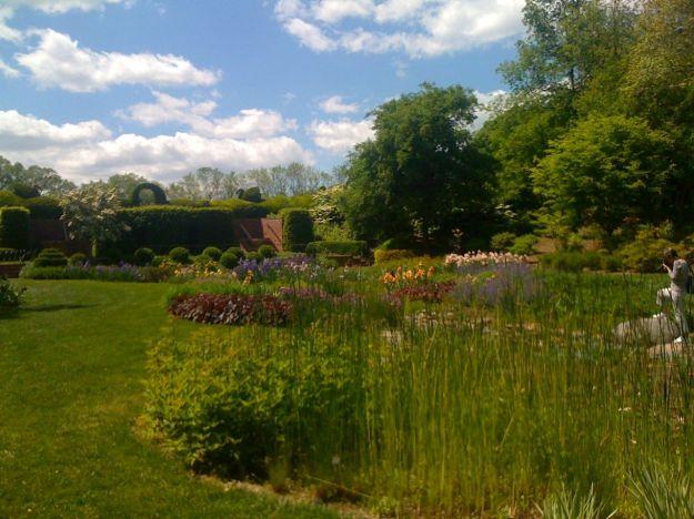 The Iris Garden-5