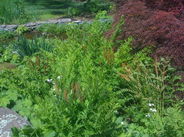 The Iris Garden-6